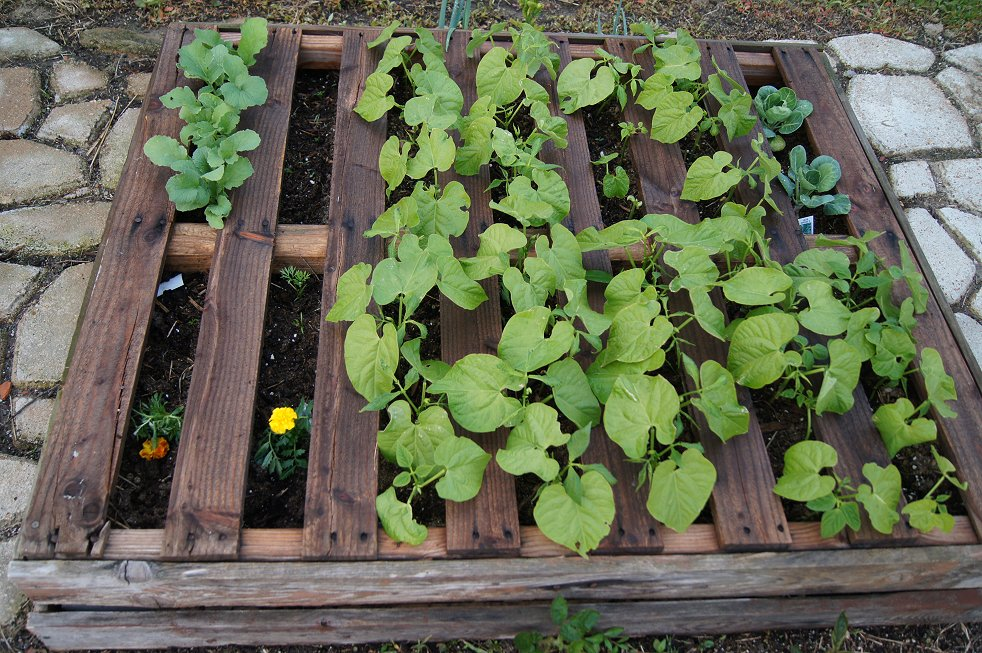 What would you say if I told you how to make a raised  bed garden at $0.00 cost Dsc07797_zpsc65c5d33