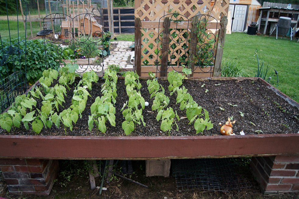 What would you say if I told you how to make a raised  bed garden at $0.00 cost Dsc07802_zpsc832d1be