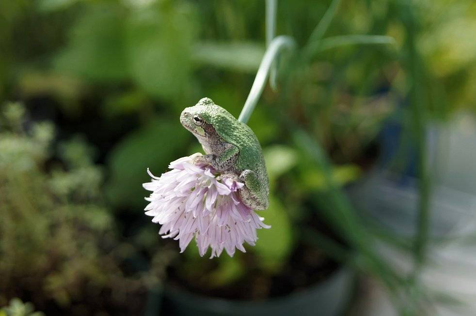 A visitor in the greenhouse Frogonchives