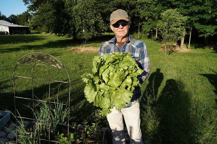 Lettuce Lettuce