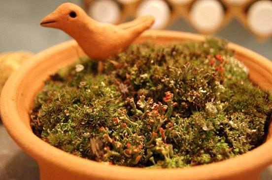 medieval watering pot Mosscloseup