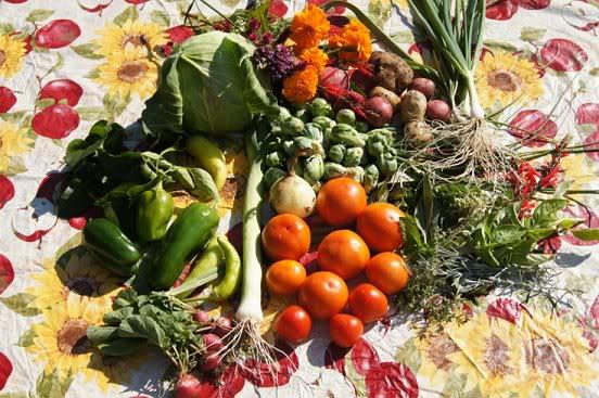 October Harvest Octharvest