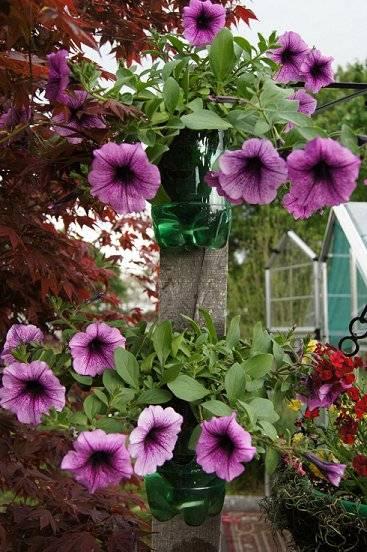 self water soda bottle planters Poleofflowersupclose