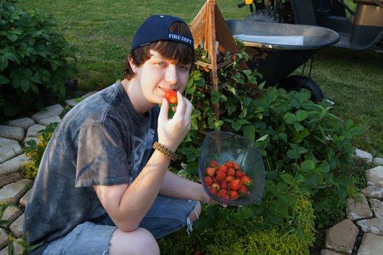 Strawberry tree plans Strawberries2