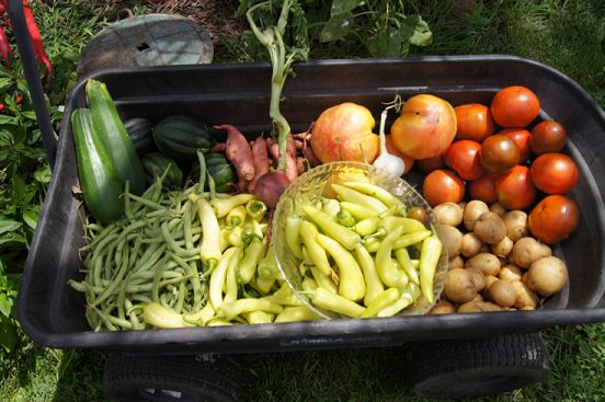 Rabbit manure, red wiggler worms & your garden 7-27-13harvest_zps688b67a1