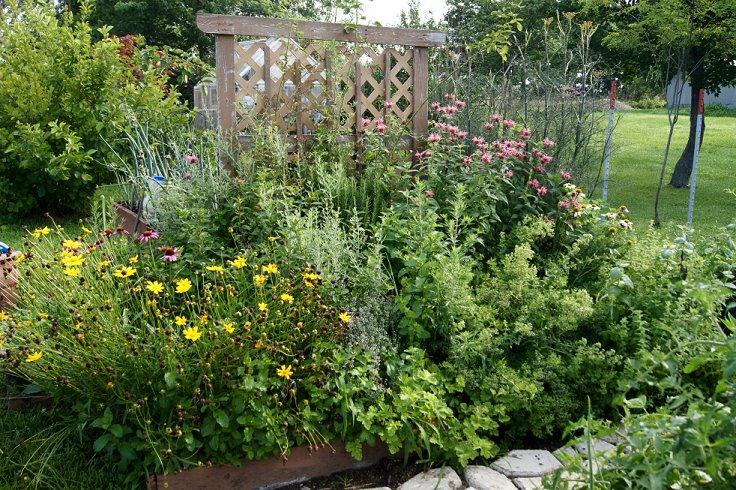 Certified Illinois Herb Garden Herbgarden20137-7-13_zps2baedf97