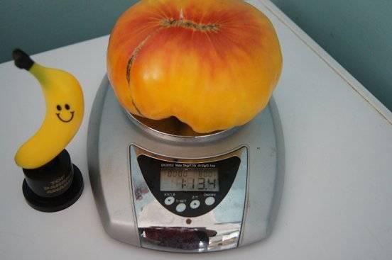 Big tomato Bigtomatoe_zps32607d91
