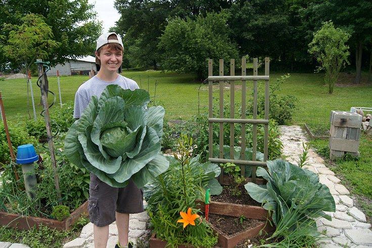 cabbage 8lb 10 oz Cabbage8lb10oz_zpsc3cb3bed