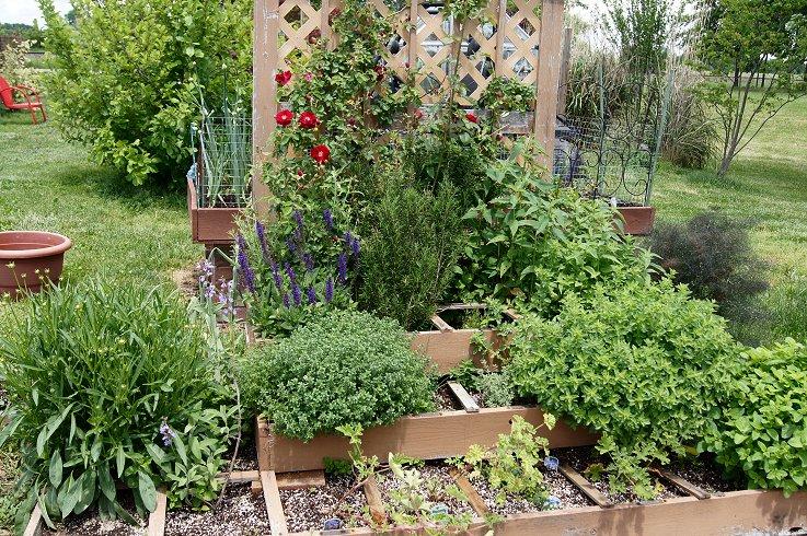 Certified Illinois Herb Garden Herbgardenmay_zps88e9d62b