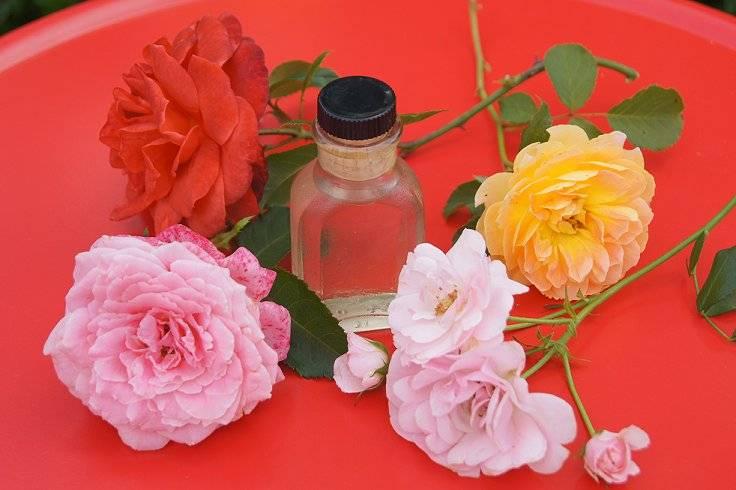 Make Rose Water 1-1_zpsdbf0e818