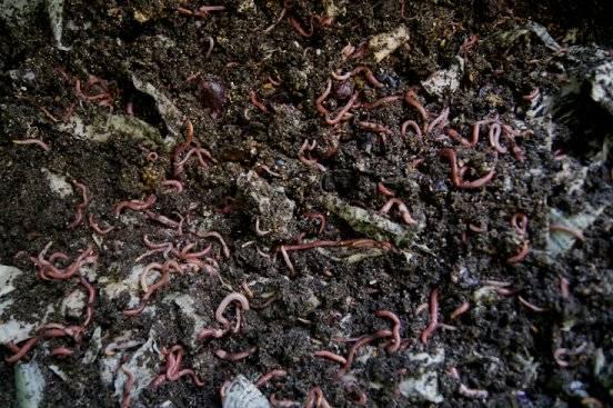 Making a cheap worm bin 3-27-13_zpsde81784a