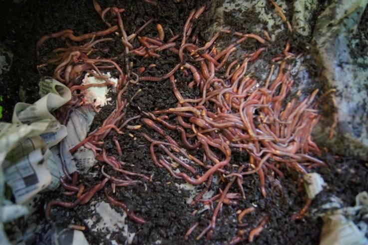 Making a cheap worm bin Wormbin2_zps57a468d3