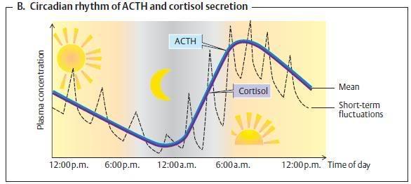 Gornji prag jutarnje svetlosti ubrzava cirkadijske ritmove, a vecernje usporava. SUN-korti