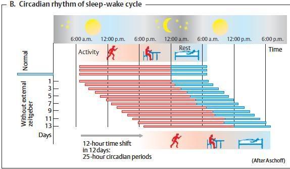 Gornji prag jutarnje svetlosti ubrzava cirkadijske ritmove, a vecernje usporava. Ustajanje-spavanje