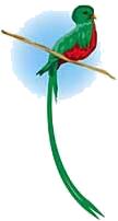 EL QUETZAL Quetzal-1