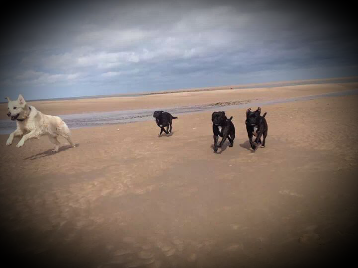 The 4 musketeers at the beach  2014-04-07182656_zps0df5ccbb
