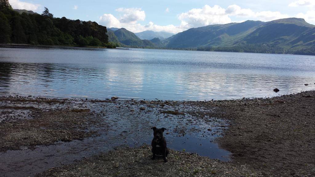 Millie and Jasper's holiday :) pic heavy!!!!!! 20140620_171244_zps04e5e882