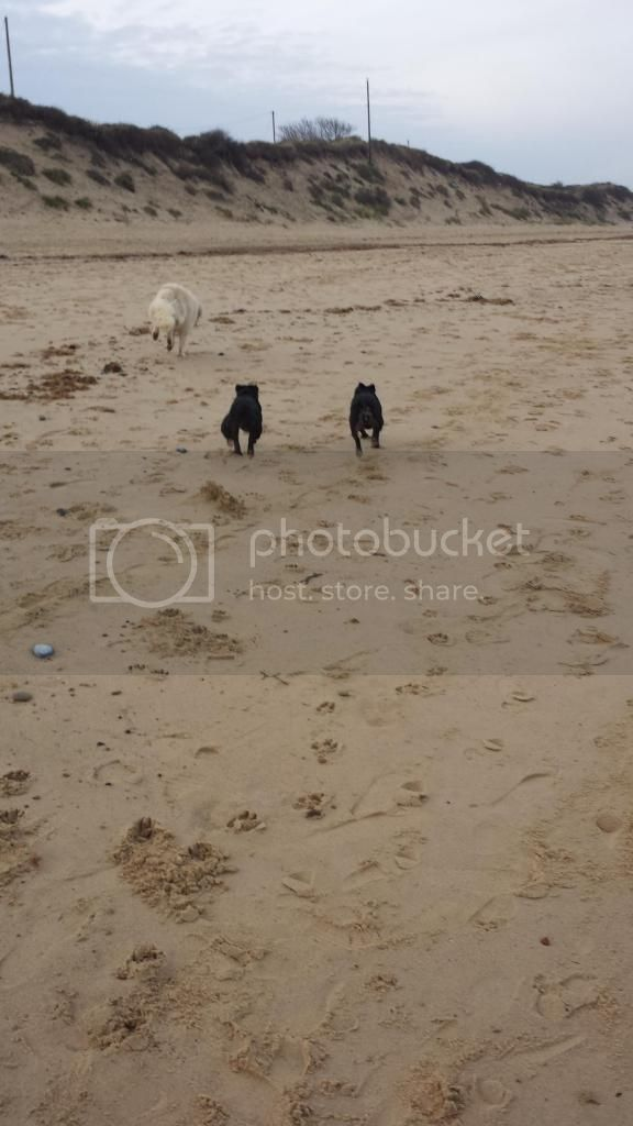 millie and jaspers boxing day beach day (pic heavy) 20141226_144135_zps4aa63c26