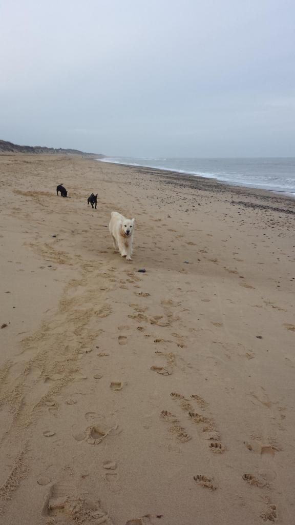 millie and jaspers boxing day beach day (pic heavy) 20141226_144248_zps55d1c705