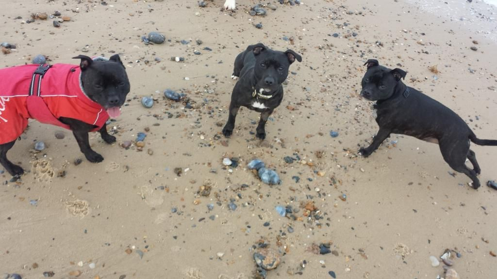 millie and jaspers boxing day beach day (pic heavy) 20141226_144332_zps6682db06