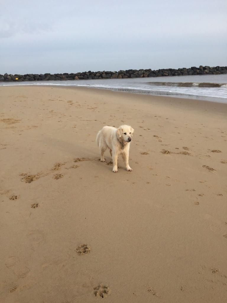 millie and jaspers boxing day beach day (pic heavy) IMG-20141226-WA0015_zps95720f7f