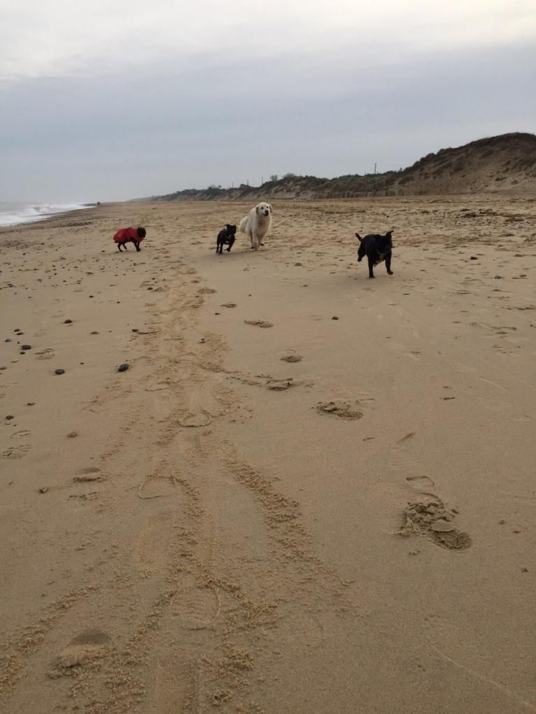 millie and jaspers boxing day beach day (pic heavy) IMG-20141226-WA0045_zpsfe544013