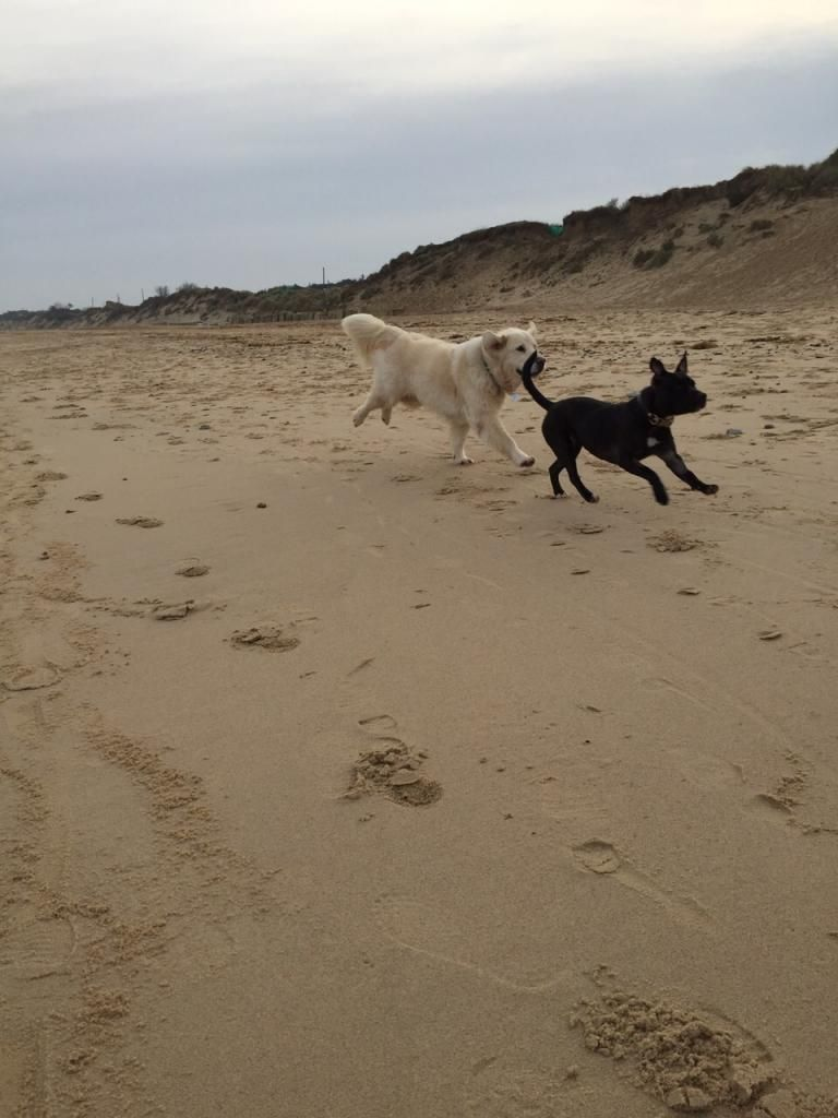 millie and jaspers boxing day beach day (pic heavy) IMG-20141226-WA0047_zpse3d2d91a