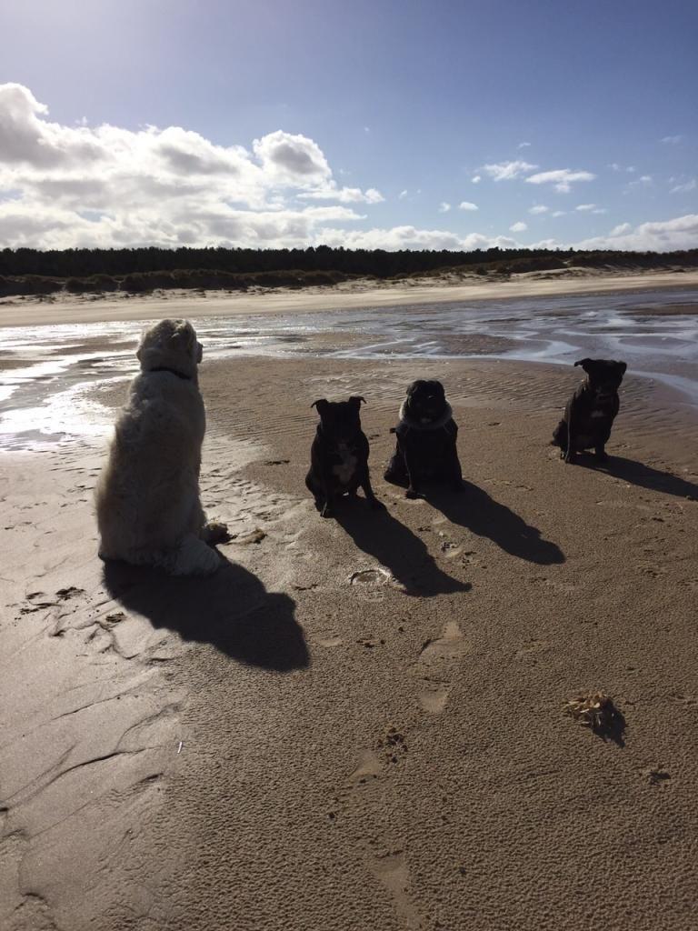 beach day ( pic heavy!! )  IMG-20150301-WA0001_zpsw02zr5ck