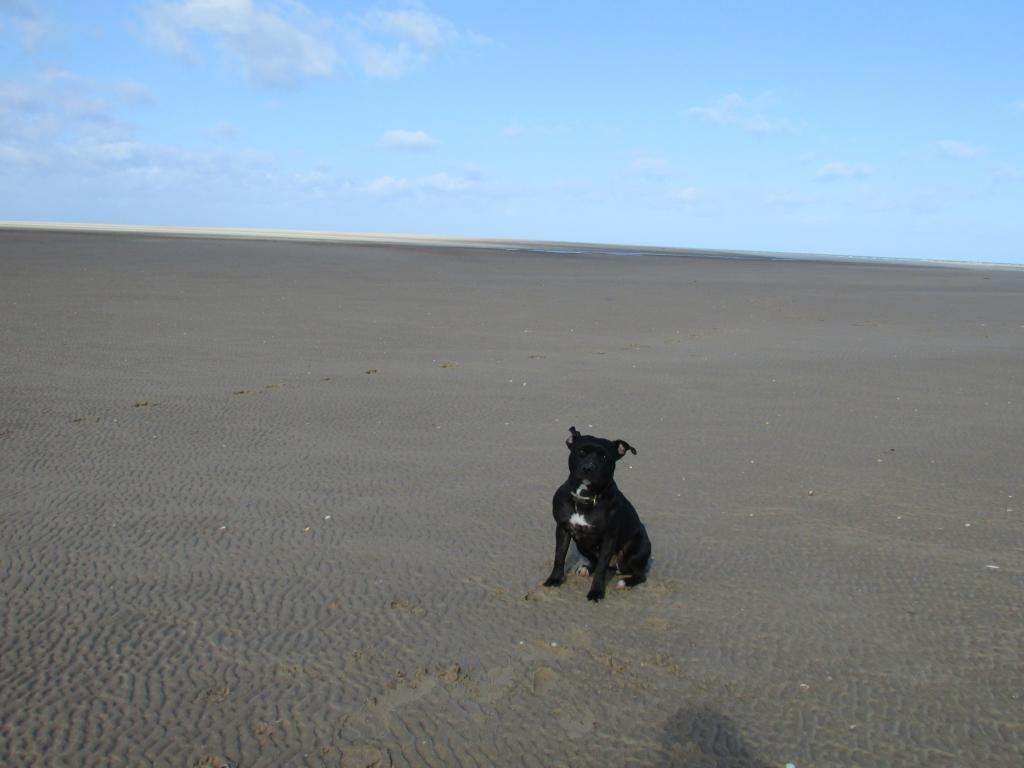 beach day ( pic heavy!! )  IMG_0035_zpsmhgng1yb