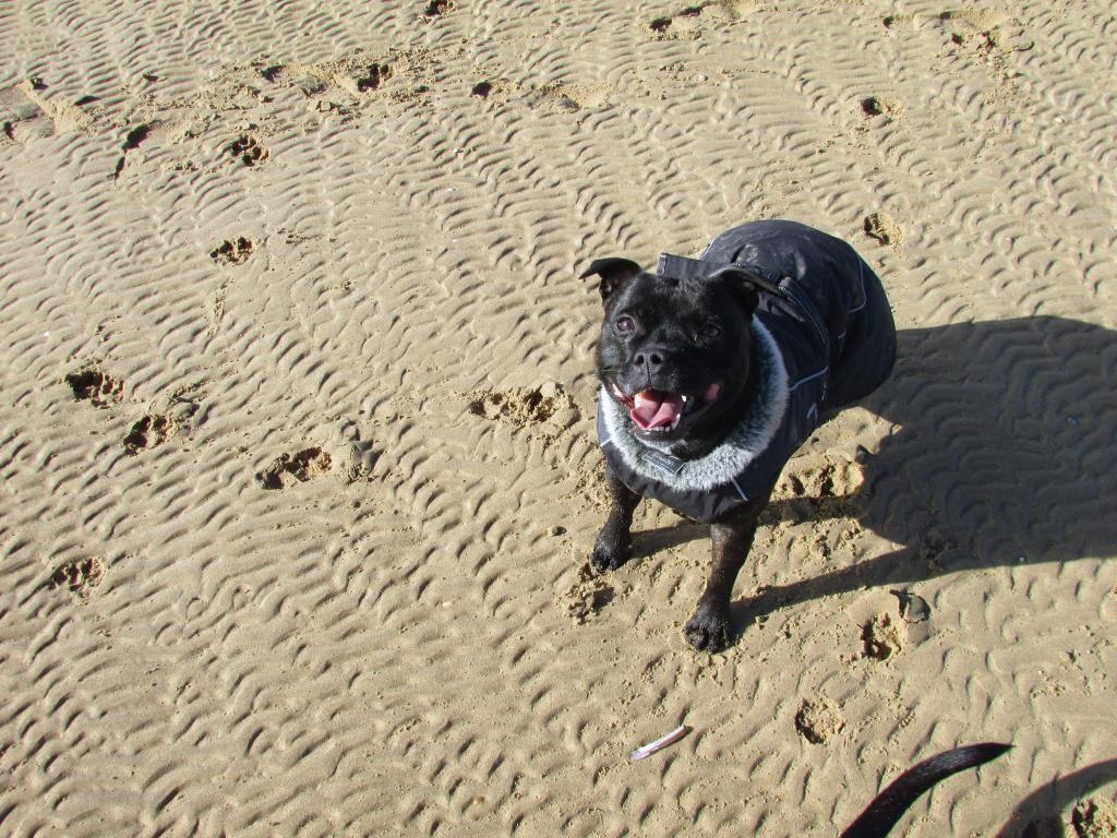 beach day ( pic heavy!! )  IMG_0036_1_zps1b5bbtqr