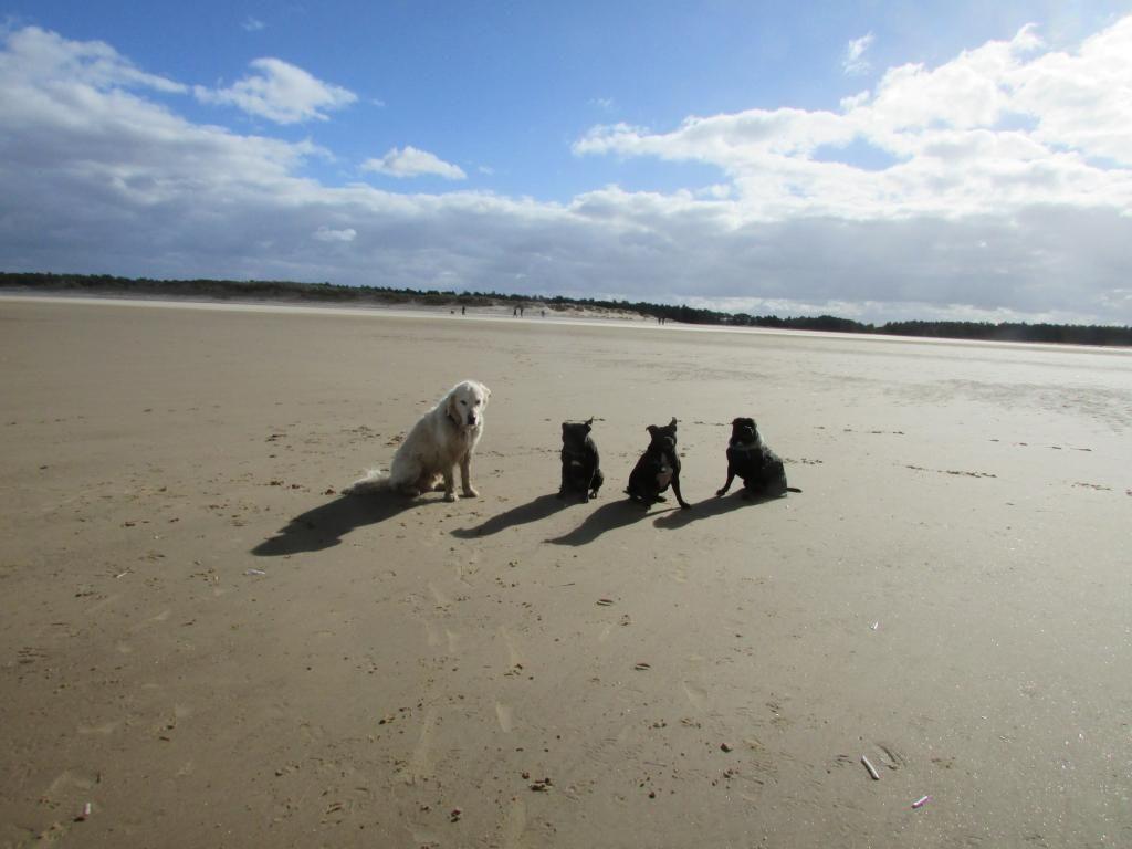 beach day ( pic heavy!! )  IMG_0095_zpsi4dvnqgq