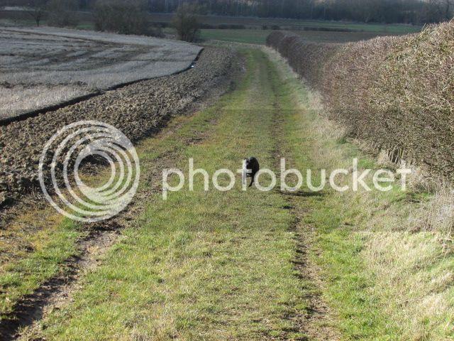 one of my walks today :) IMG_0190_zpspk5ccza3