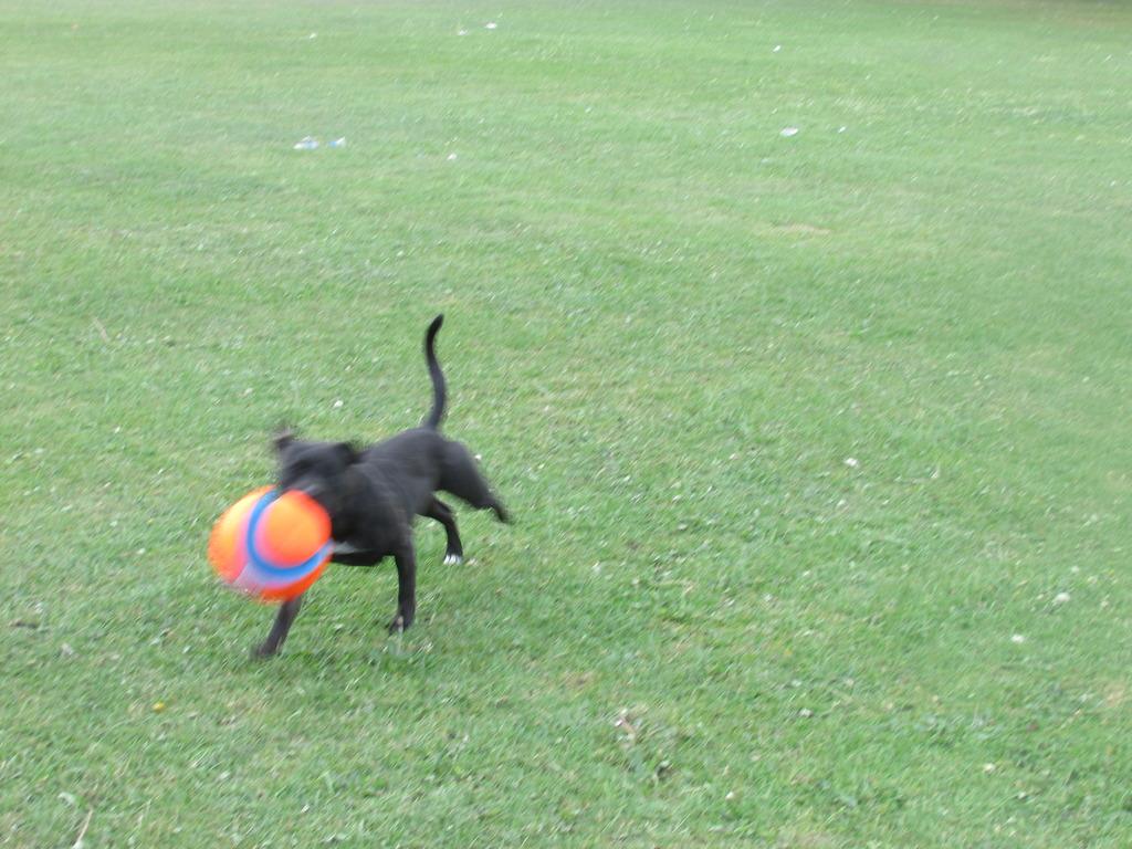 new ball :) play time!!! IMG_1122_zpsq9htagxa