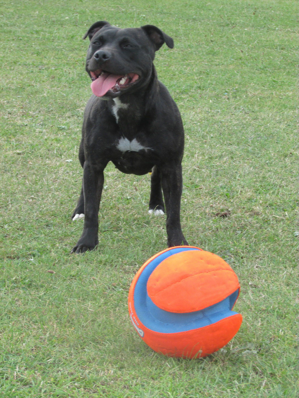 new ball :) play time!!! IMG_1125_zps0yvlin3t