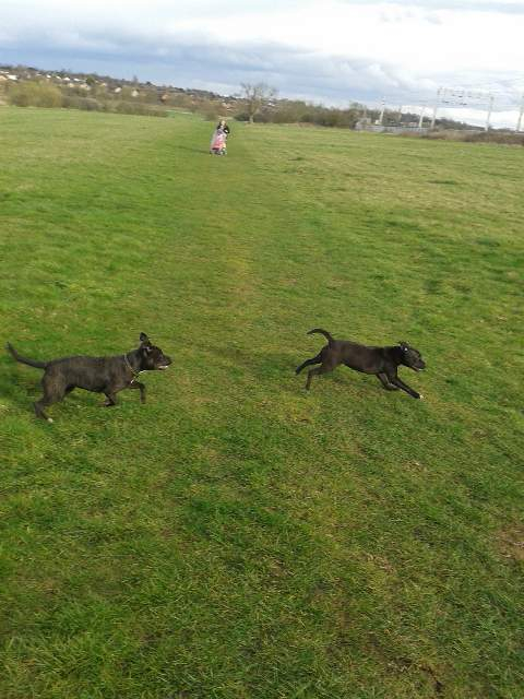 Millie and her sister IMG_20140322_181502_zps79591d52