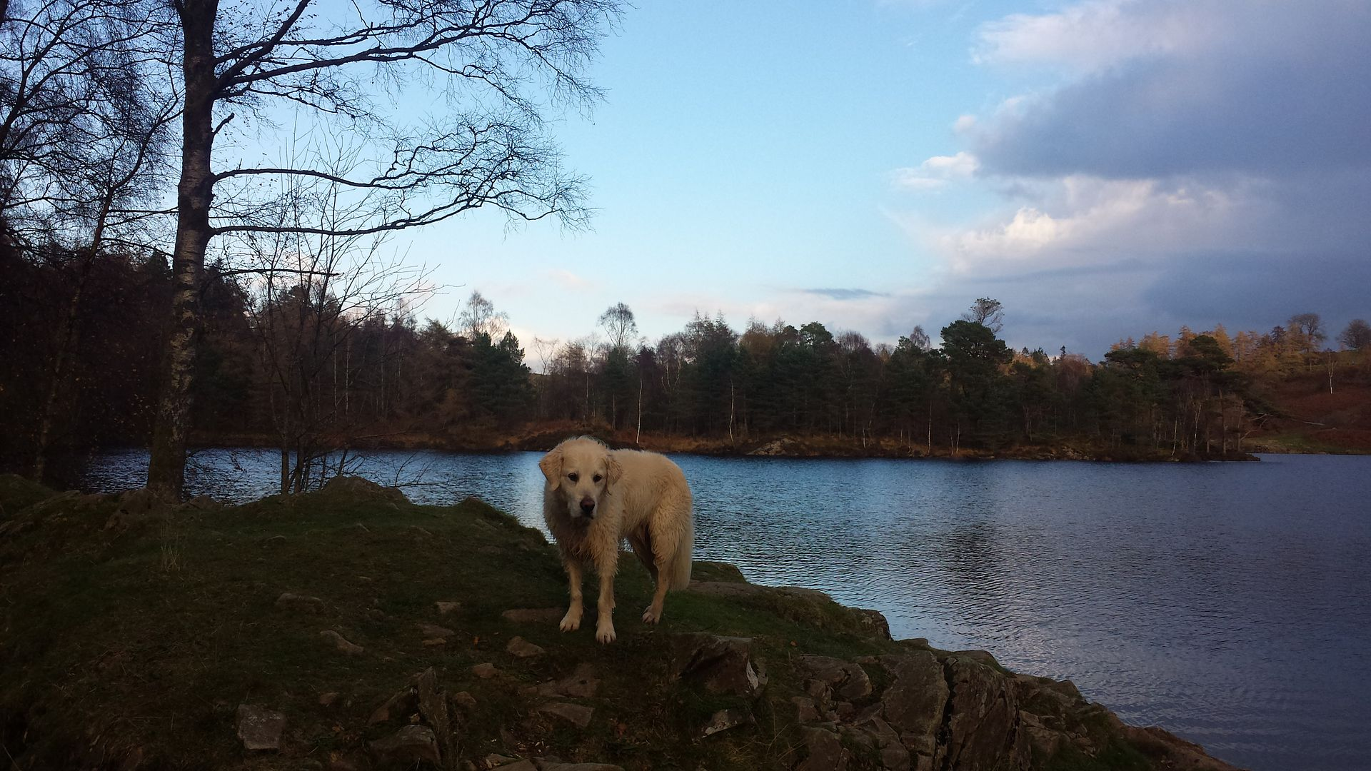Millie and jaspers holiday in the lakes :)  20141102_144528_zps53d85697