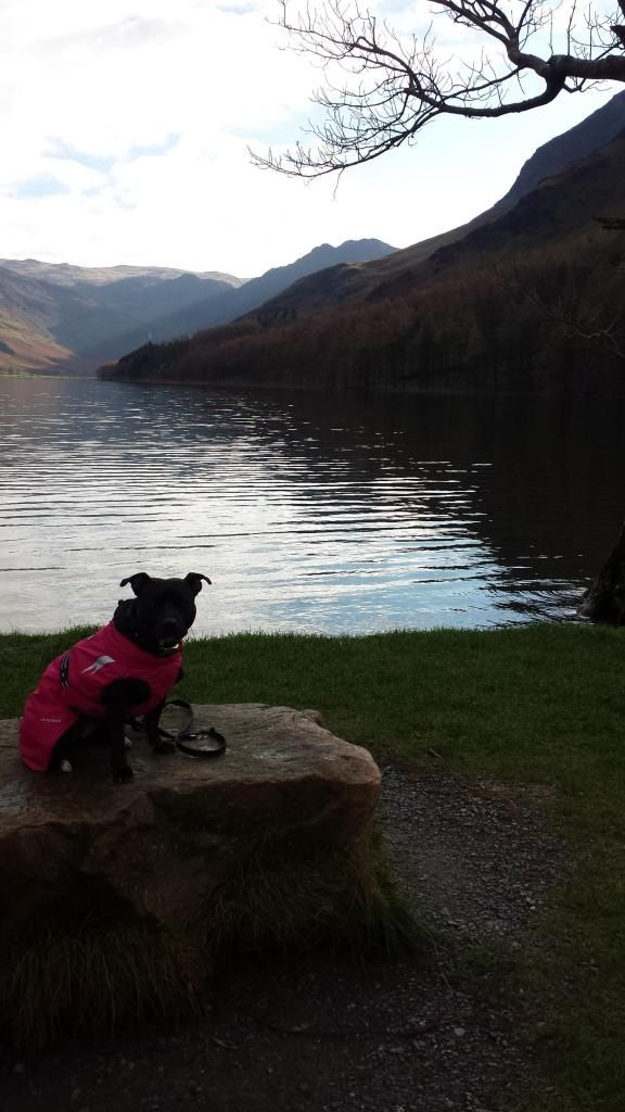 Millie and jaspers holiday in the lakes :)  20141104_120913_zps9dd25ccc