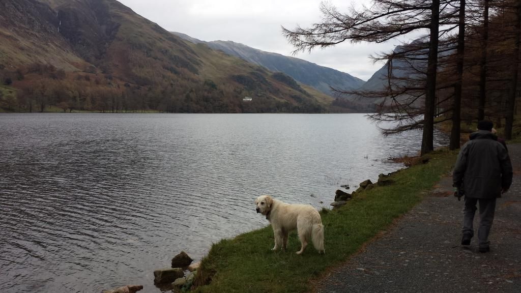 Millie and jaspers holiday in the lakes :)  20141104_123723_zps1b06b70f