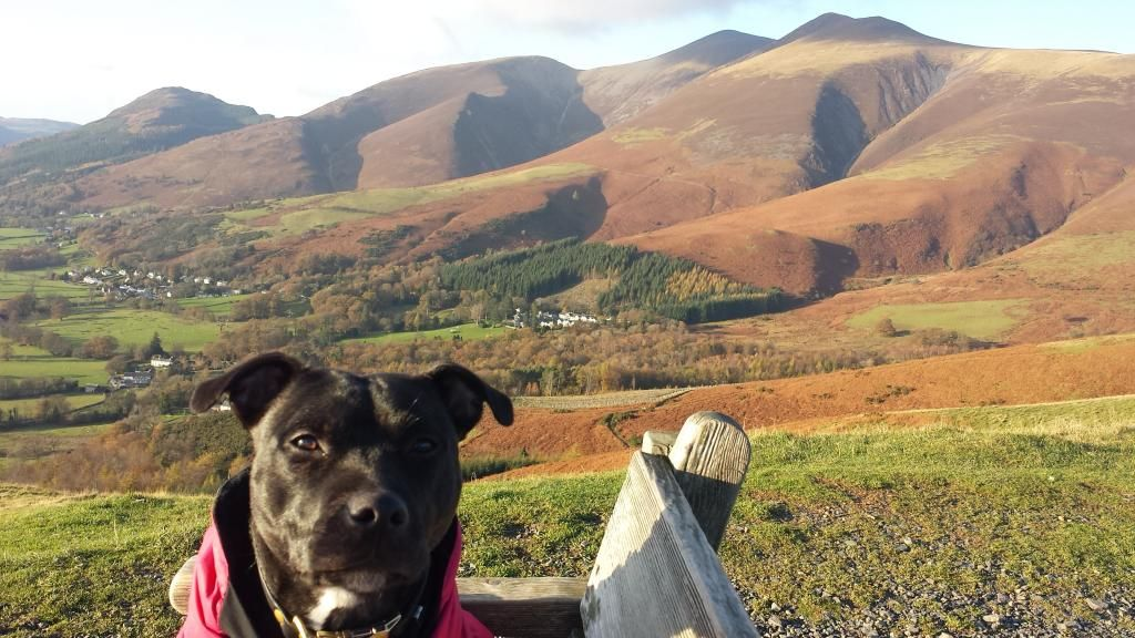 Millie and jaspers holiday in the lakes :)  20141105_150109_zps702344a5