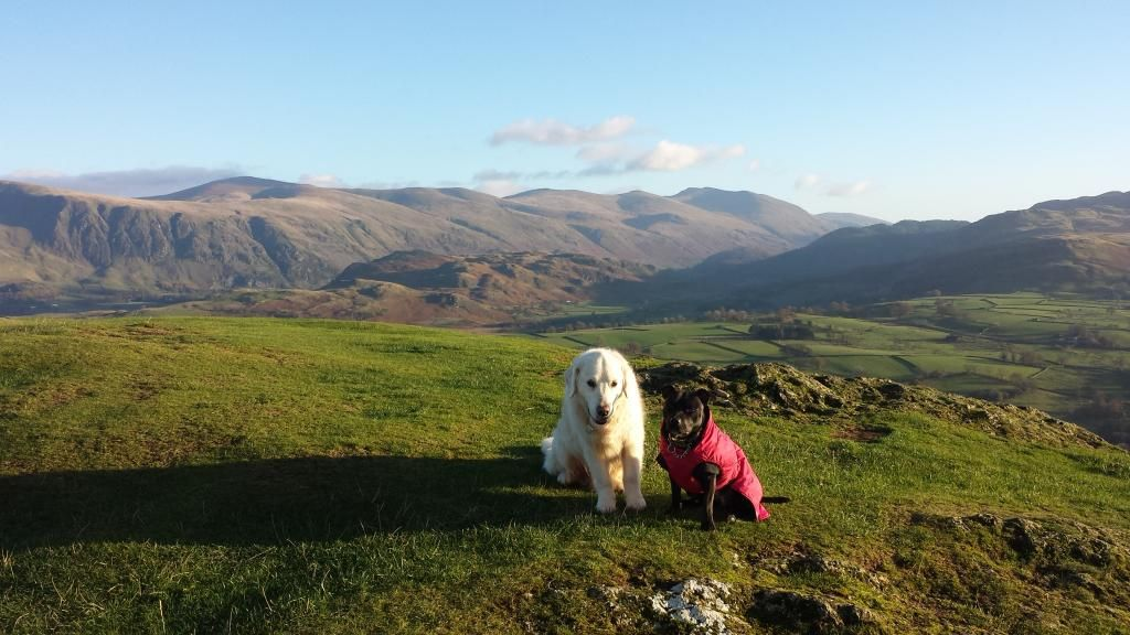 Millie and jaspers holiday in the lakes :)  20141105_150943_zps08bf439d