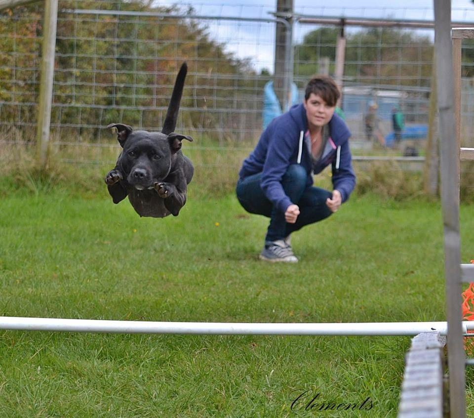 canine athletics continued :) Athletics%20prof%203_zps2c1lgwso