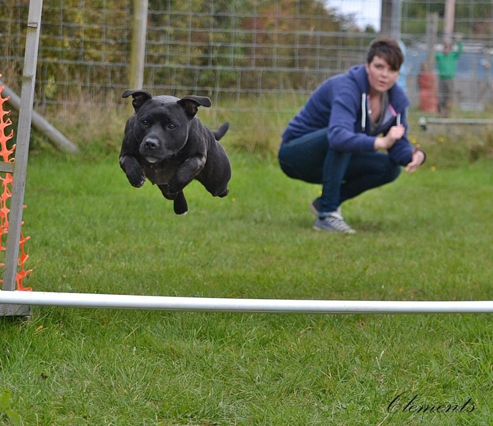 canine athletics continued :) Athletics%20prof_zpsiqomcbzd