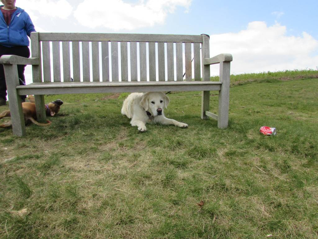 another great day out :) 20 mile walk and play  Bench_zps2koqdxod