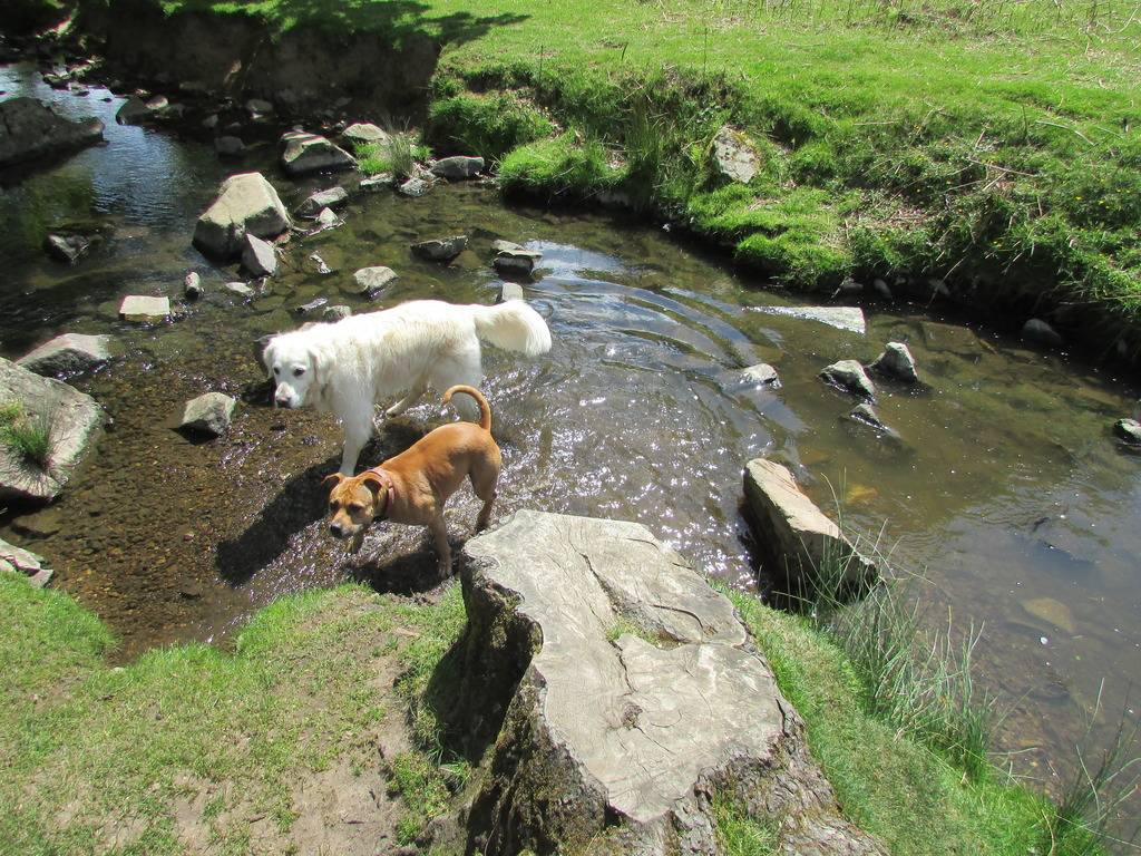 another great day out :) 20 mile walk and play  Both%20water_zpssbdfxcga