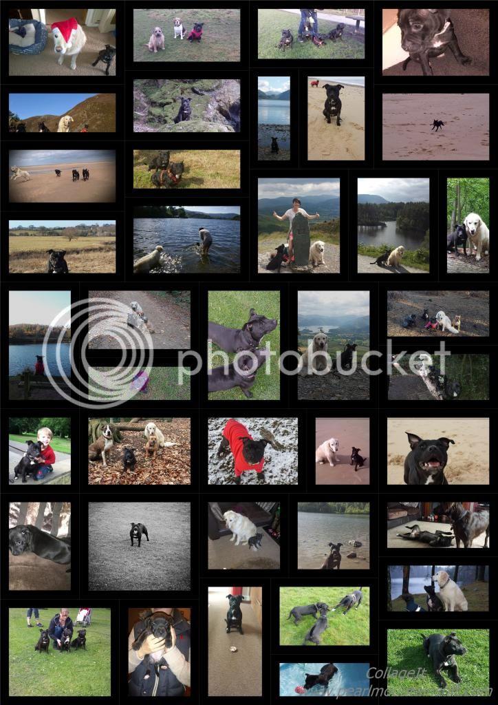 collage of millie :) Collage%20amazing_zpsmkllbghm