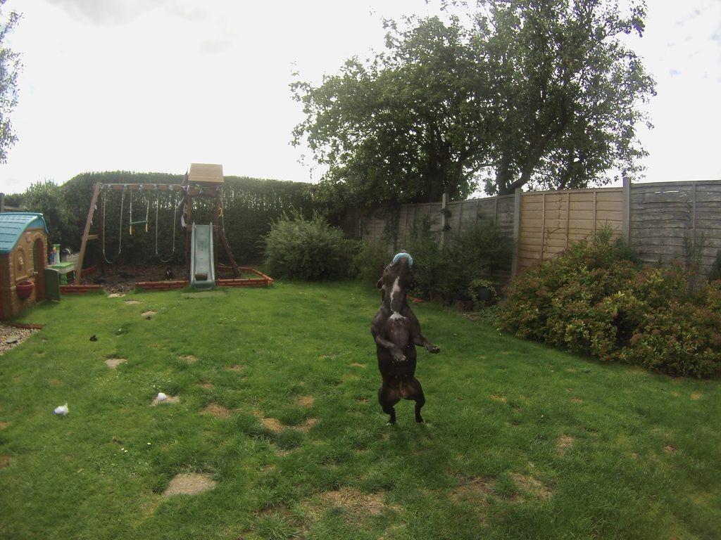 some pics in the garden :)  Jump%202_zpspnf8efbj