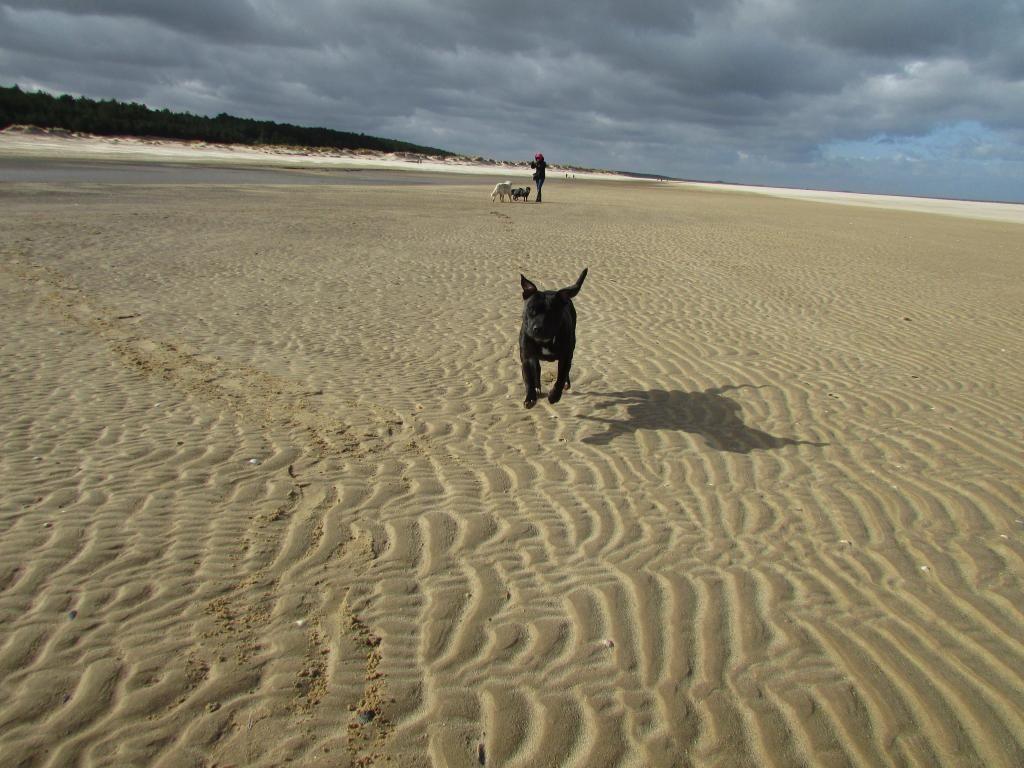 beach day ( pic heavy!! )  Millie%20moo_zpspu9zpdaz