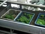 Vivero de plantas acuáticas  Th_MOV01499
