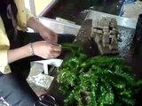 Vivero de plantas acuáticas  Th_MOV01501
