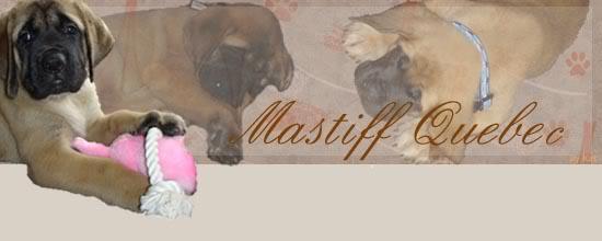 Forum - Mastiff